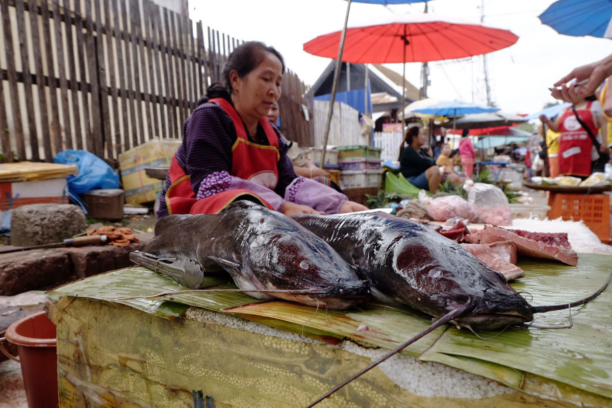 Pesce gatto al mercato di Luang Prabang in Laos