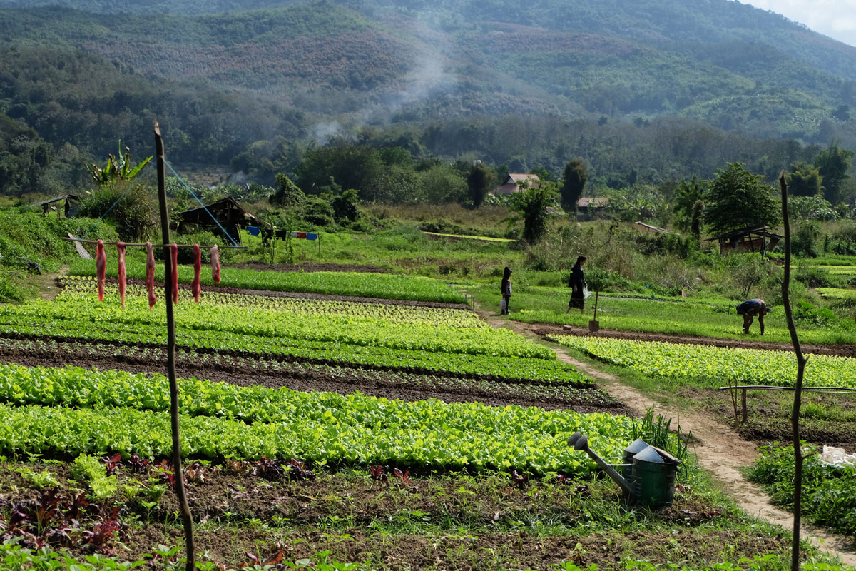 contadini laotiani