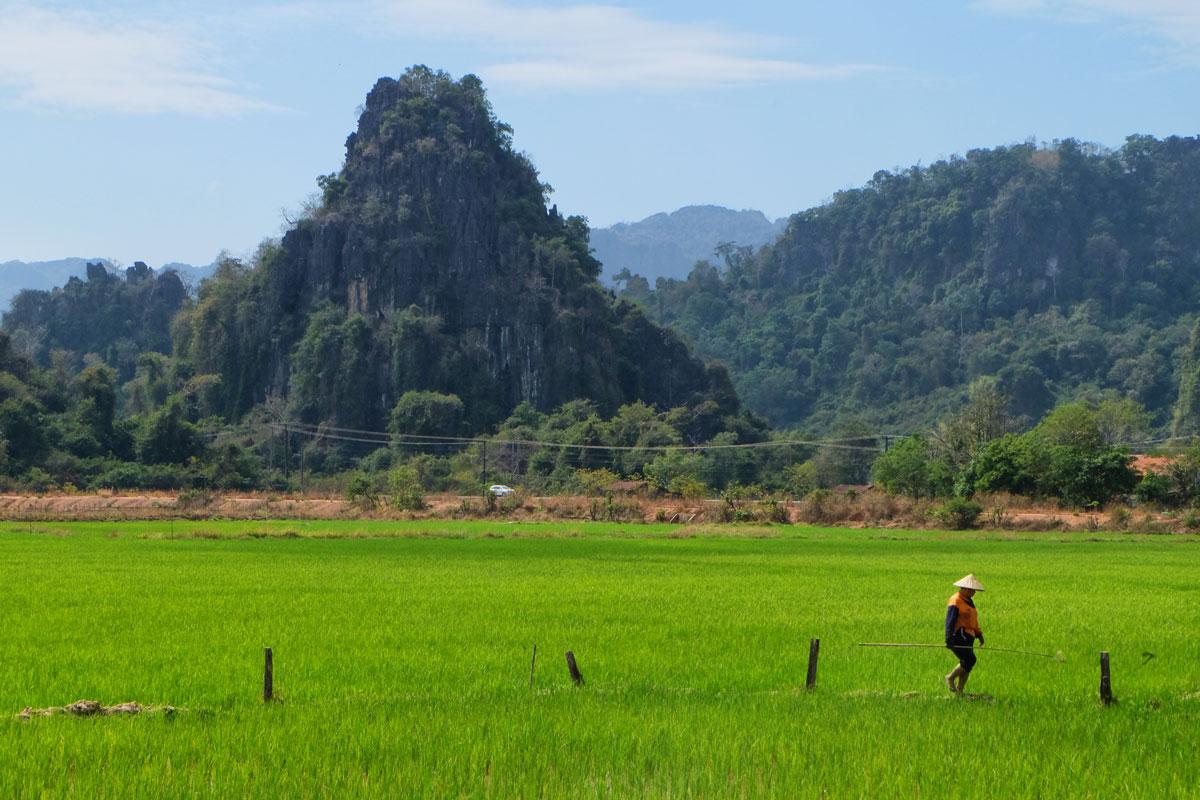 Laos zaino in spalla, risaia