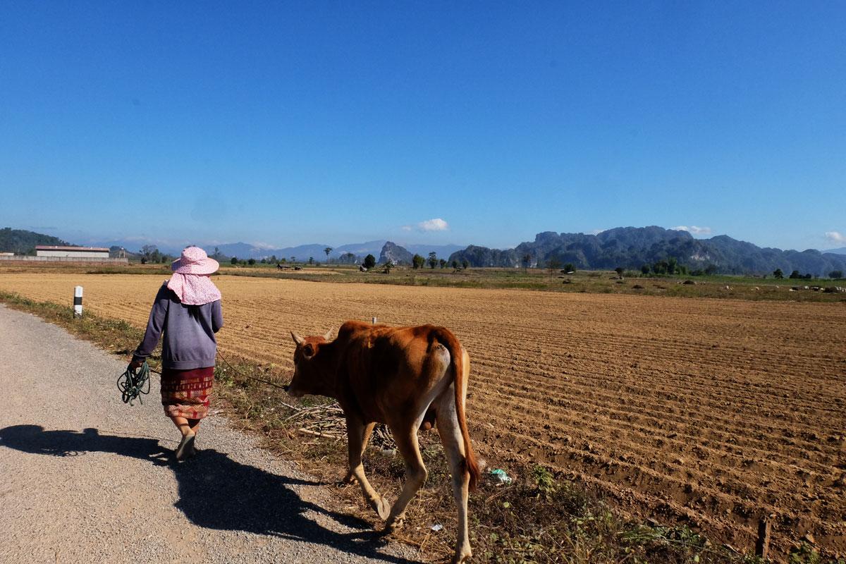 Laos zaino in spalla e donna con bue